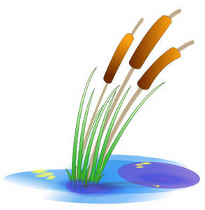 Free Clipart Picture of Cattails in a Pond