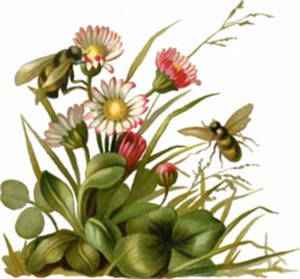 Free Clipart Picture of Bees Pollinating Daisies
