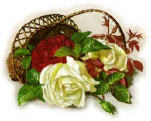 Free Clipart Picture of White and Red Roses in a Basket