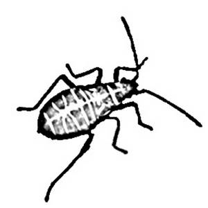 Clipart Picture of a Beetle with Long Feelers