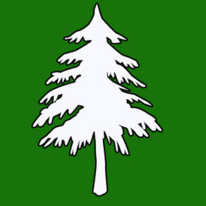 Free Clipart Picture of a White Pine Tree on a Green Background
