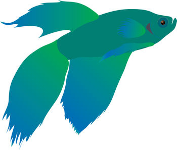 Free Clip Art Picture of a Blue and Green Beta Fish