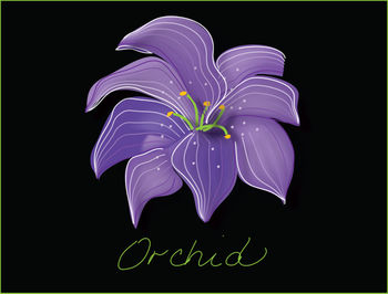 Free Clip Art Picture of an Orchid