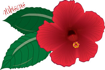 Free Clip Art Picture of a Red Hibiscus Flower