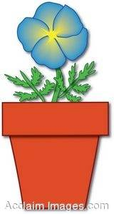 Blue Flower in a Pot