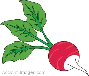 clipart illustration of a radish with leaves attached rh clipartguide com radish clipart free radish image clipart