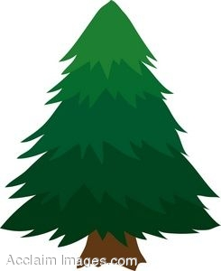 Cartoon Tree Pine – No more sugar maples till you finish your evergreen!