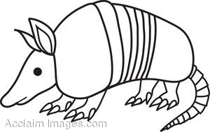 Armadillo Coloring Pages Printable - Kids Educational Preschool