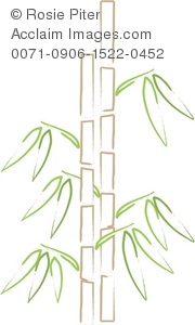 Outline Of A Stand Of Bamboo