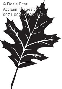 The Silhouette Of A Oak Leaf