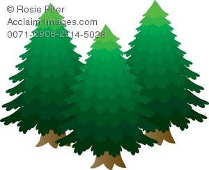 A Group Of Pine Trees