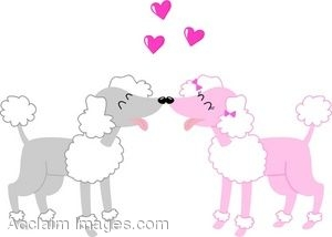 Poodles In Love