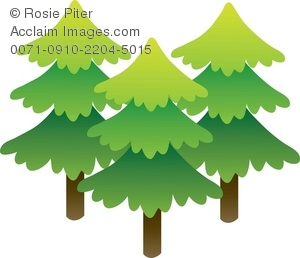 Group Of Pine Trees