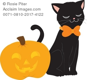 black cat and halloween jack o lantern pumpkin