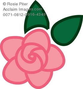 Pretty pink rose with green leaves
