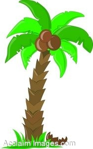 clip art of a palm tree with coconuts rh clipartguide com coconut tree clip art black and white coconut tree clipart free