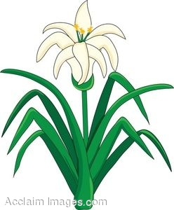 clip art of an easter lily flower plant rh clipartguide com easter lilies clipart black and white easter lily cross clipart