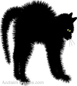 Scared Black Cat