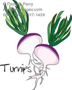 clip art illustration of fresh picked turnips with green leaves