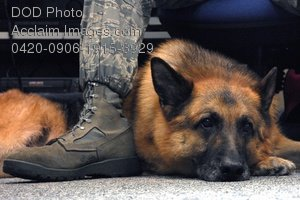 Clip Art Stock Photo of a Military Dog Resting