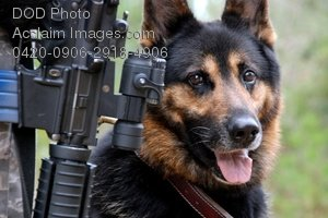 Free Public Domain Picture: Military Working Dog With His Handler