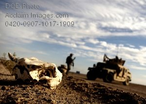 Free Public Domain Picture: Animal Skull Laying at a Search Site For Abducted American Soldiers, Iraq