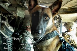 Free Public Domain Picture: Military Police Dog and His Handler Photo