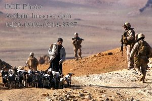 Free Public Domain Picture: An Afghan Boy Walking a Herd of Goats in Afghanistan While American Soldiers Patrol