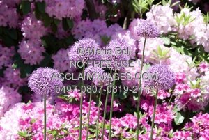 Pretty purple flowers growing in a flower garden