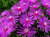Purple Flowers in Nature clipart