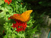 Butterfly Lit on a Red Flower clipart