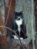 Black and White Cat in The Woods clipart