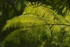 Ferns in a Forest clipart