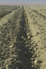 Farming and Agriculture; Plowed Rows of Dirt clipart
