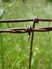 Barbed Wire Fence clipart