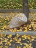 A Bag of Leaves on a Curb clipart