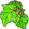 Green Leaves and Acorn Nuts clipart