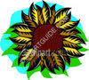 Single Sunflower clipart