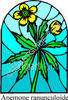 Anemone Ranunculoide - Yellow Flowers - Stained Glass Window clipart