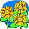 Sunflowers in Bloom clipart