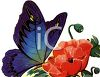Large Blue Butterfly on a Poppy Flower Clip Art clipart