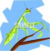 Praying Mantis Clipart clipart