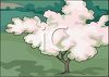 Flowering Tree, in a Park,  in Full Bloom clipart