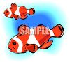 Clown Fishes clipart