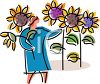 Woman Picking Sunflowers clipart