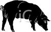 Silhouette of a Pig with It's Snout Down clipart