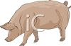 Pink Hog with a Curly Tail clipart