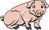 Cute, Young Pig clipart