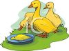 Yellow Ducklings Eating clipart