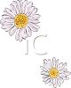 Two Daisies clipart